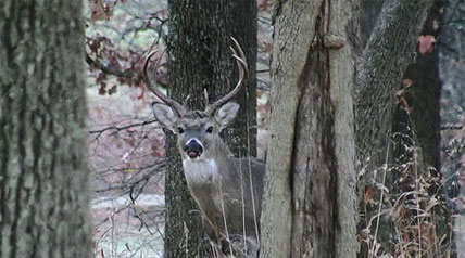 In the Northeast, New York is known as a big deer hunting state for five reasons: It has a lot of country, it has a lot of hunters, it has a lot of deer, the deer get big (for the Northeast) and it has a long tradition of deer hunting.
