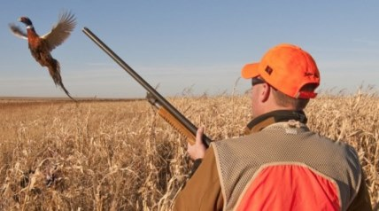 If you have done your pre-season homework and have the dog ready to go, pheasant season is a can't-miss occasion that results in the cackle of ring-necked roosters erupting from cover.