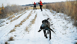 Pheasant Hunting's In-Season Formula for Success