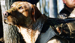 Building a Better Bird dog