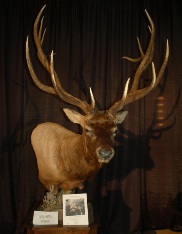 Steve Felix's Word Record Typical American Elk