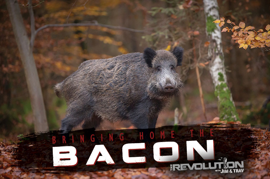 Bringing Home the Bacon on The Revolution with Jim & Trav