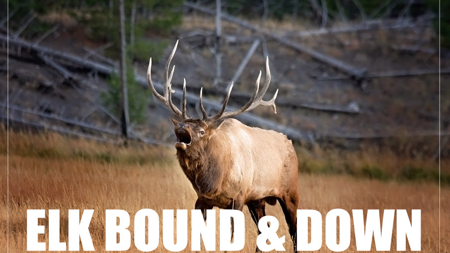 Elk Bound & Down
