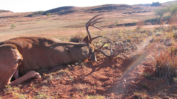 the ultimate rut hunting guide all day hunt