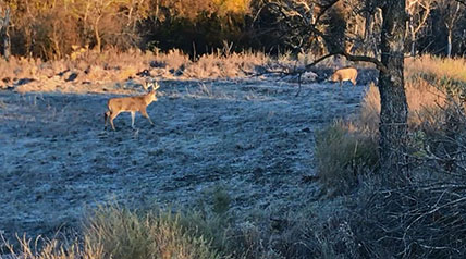 The annual whitetail rut is brief, so take full advantage of lovesick bucks throughout each and every transitional phase to increase your chances to connect with a trophy.