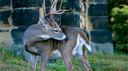 "Although many seek the wide-open rural landscapes or big woods for deer hunting, it likely will come to no surprise to many of us that there are some ""thick"" deer populations in many suburban and even urban areas."
