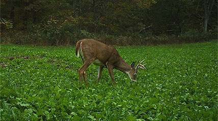 A four-season guide to what white-tailed deer eat, when they eat it, and why they eat it, to help you become a more strategic hunter.