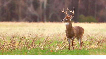 You think you know deer? Check out these unusual deer facts and impress your friends in camp.