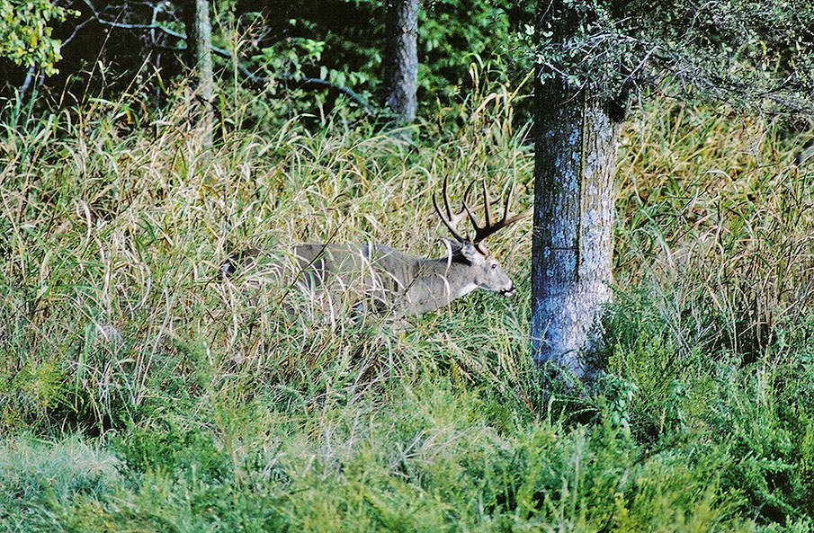 Science and Effects of Deer Hunting Pressure