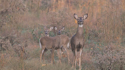 The North Dakota Game and Fish Department is currently working with 30 landowners in 19 hunting units across the state who would like to host antlerless deer hunters in 2011.