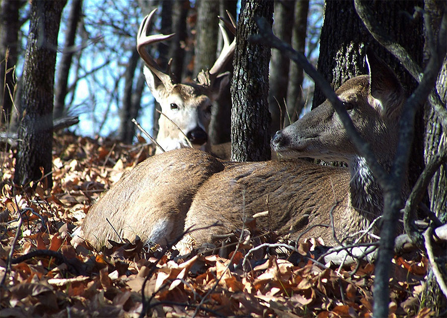 During the Rut Lockdown Phase, Patience Pays Big