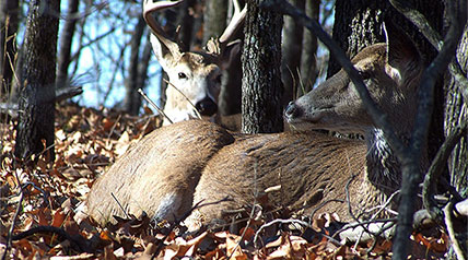 As deer activity begins to slow with the lockdown phase of the rut approaching, now is the time to lockdown yourself on some key areas and prepare to the play the waiting game