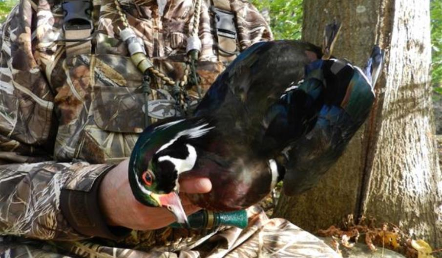 Why You Should Hunt Wood Ducks