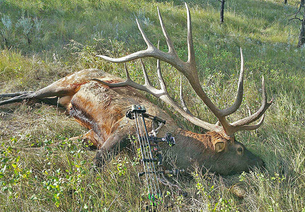 World Record Elk in field