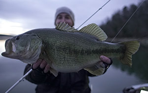 The Hunt for Monster Bass