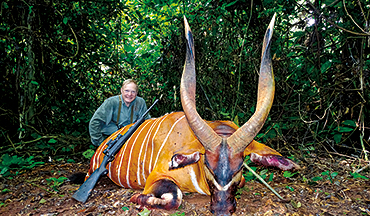 The hunt for a dwarf forest buffalo takes an unexpected turn when the bongo of a lifetime appears.