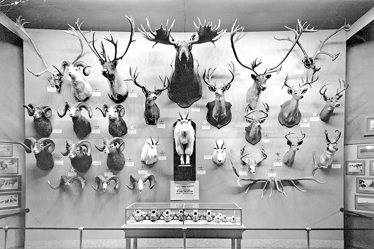 Boone and Crockett Club: More Than Records