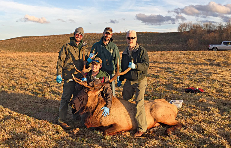 conservation officers with bull elk