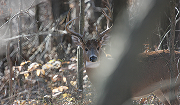 Buck patterns change in the late season, so here's what to look for when old brutes go into hiding.