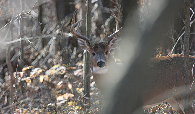 Where to Find Whitetails in the Late Season