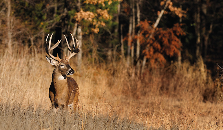 Tips for Hunting Mature Whitetails