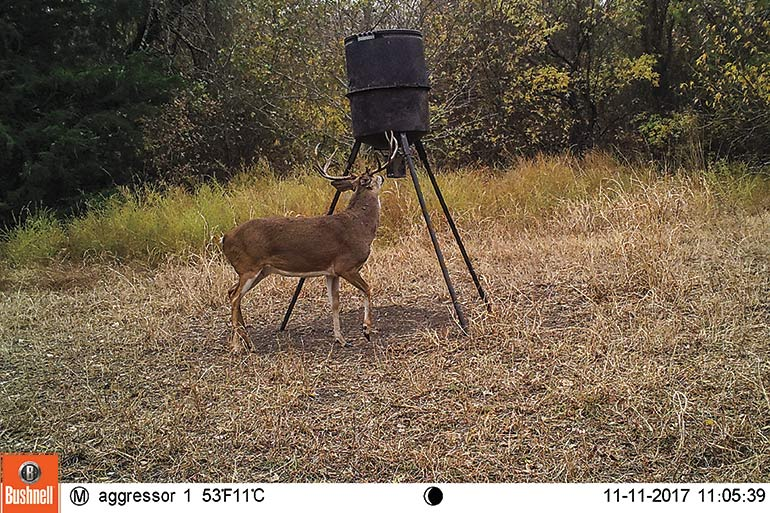 trail cam photo of buck at feeder