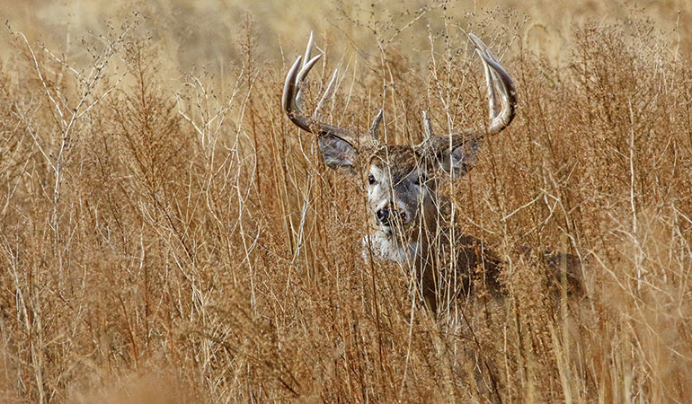 How To Manage a Small Property for Whitetails