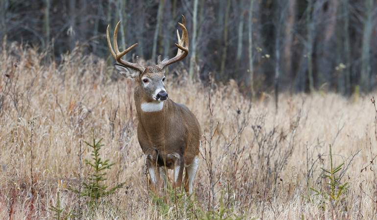 Saskatchewan-Tourism-Whitetail.jpg