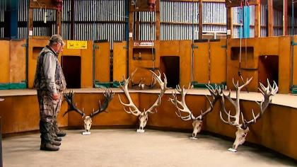 Kevin Steele visits a red stag trophy room in New Zealand and then sets out to hunt one for himself.