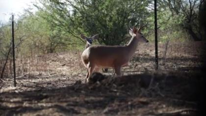 """Curt Wells travels to Mexico to finish his """"Deer Slam"""" by taking a coues deer."""