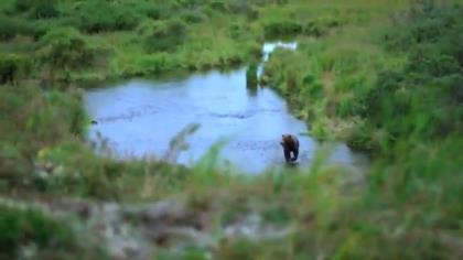 Host Curt Wells chronicles his continuing effort to arrow a giant brown bear in the Alaska wilds.
