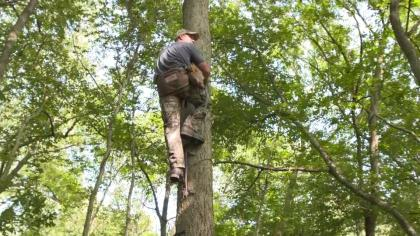Sectional sticks are the most popular tree-climbing method among saddle enthusiasts because sticks are safe, effective, easy to use, and you only have to hang three or four of them to reach heights of 17-22 feet if you add a lightweight climbing aider.