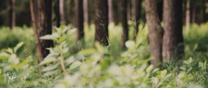 """Wildlife Management expert Dr. James Kroll, AKA """"Dr. Deer,"""" and Landscaping expert Jonathan Judice talk about the right kinds of plants to have available as natural forage for deer on your land."""
