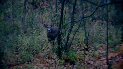 Suburban areas are always teeming with whitetails, and that means there's a big buck hidden somewhere. Contributor Alex Comstock has found great success hunting suburban areas, so after years of practice, he's finally sharing the steps to success so that you can become a suburban deer scouter!