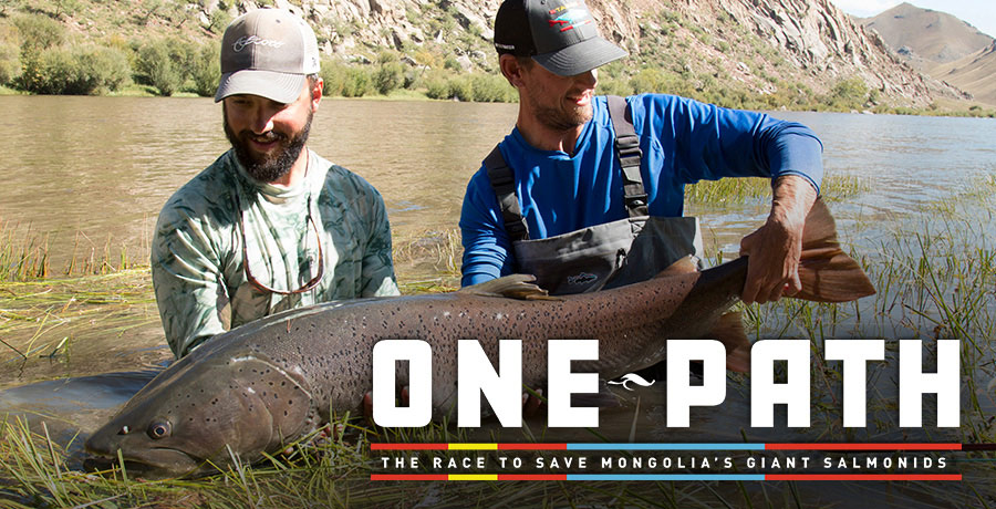 One Path: The Race to Save Mongolia's Giant Salmonids