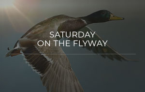 Saturday on the Flyway