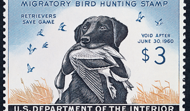 Reese was a five-time winner of the Federal Duck Stamp art competition.