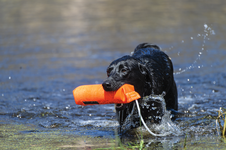 Achieving a Healthy Weight for Your Duck Dog