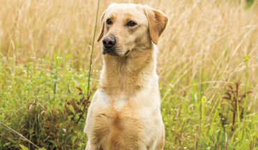 A little training can save your dog from a serious injury.