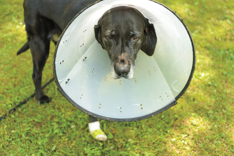 Old-Lab-With-Cone.jpg
