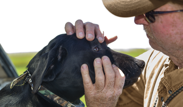 Protecting your retriever's vision requires in-field diligence.