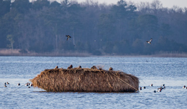 A Maryland hunter hides his boat blind with Tiki hut mats, making it invisible to decoying ducks.