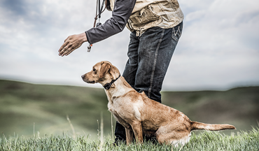 The HSUS is putting bills into motion that could make hunting with your dog a criminal act.
