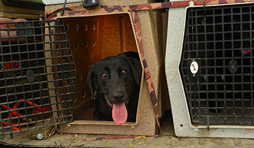 These five crates are designed to keep your retriever safe in transport!