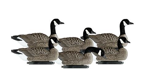 Dakota Lesser Canada Floaters