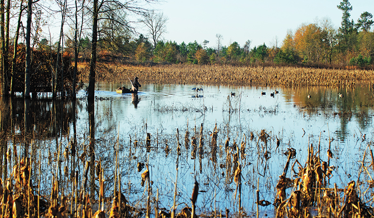 Is Hunting Waterfowl in Flooded Corn Fair Chase?