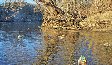 By shore blind or boat, many rivers are killer duck holes.