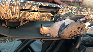 The new Impala Plus semi-auto shotgun gets a hot field test on a barrel-burner dove shoot; here's how it performed.