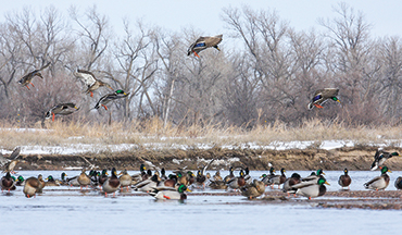 Deadly shallow-water hunters show you how to kill more greenheads and geese.