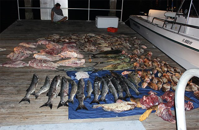 Florida FWC Arrests Four for Bag Including 86 Red Grouper, Two Goliaths